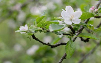 Udaberri giroan 2018: Celebración de la primavera en Sagardoetxea