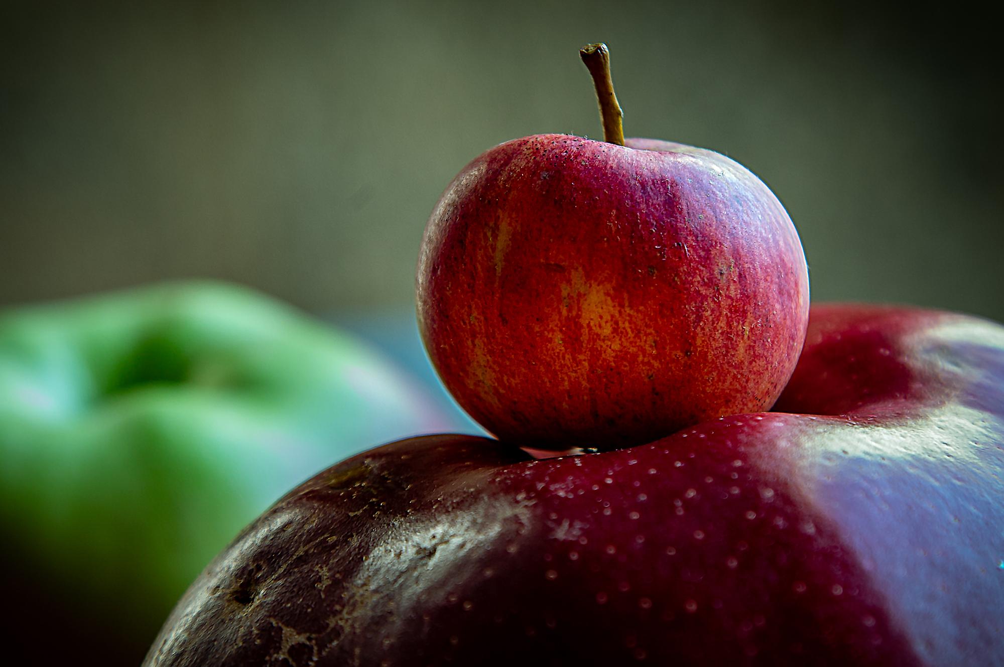 XIX. Sagar Uzta en Astigarraga, la fiesta de la manzana